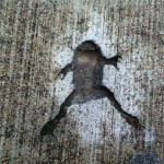 The Dead frog's toes are even visible